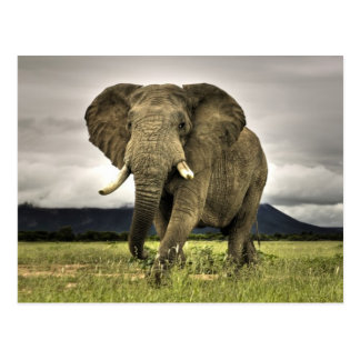 Elephant Gifts T Shirts Art Posters Amp Other Gift Ideas
