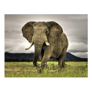 African Elephant Postcard