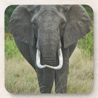 African Elephantna loxodonta, Masai Mara Game Coaster