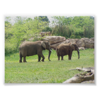 AFRICAN ELEPHANTS POSTERS