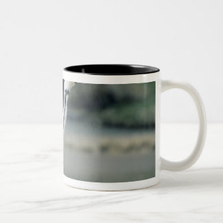African Penguin, (Spheniscus demersus), coming Two-Tone Coffee Mug
