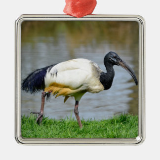 African sacred ibis walking on grass christmas ornament