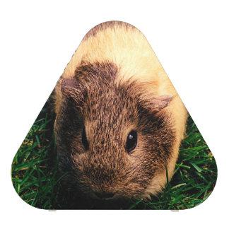 Agouti Guinea Pig in the Grass