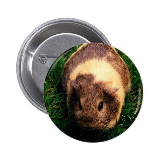 Agouti Guinea Pig in the Grass 6 Cm Round Badge