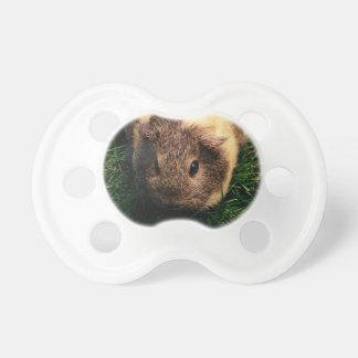 Agouti Guinea Pig in the Grass Baby Pacifier