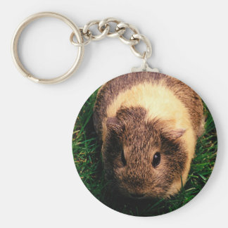 Agouti Guinea Pig in the Grass Basic Round Button Key Ring