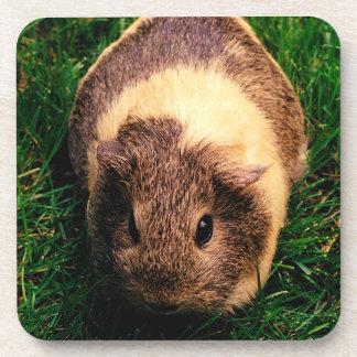 Agouti Guinea Pig in the Grass Coaster
