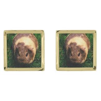Agouti Guinea Pig in the Grass Gold Finish Cufflinks