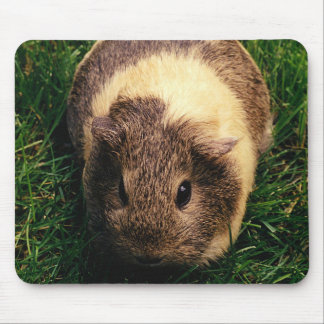 Agouti Guinea Pig in the Grass Mouse Pad