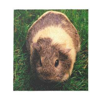 Agouti Guinea Pig in the Grass Notepad