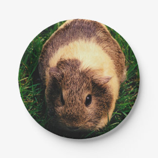 Agouti Guinea Pig in the Grass Paper Plate