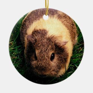 Agouti Guinea Pig in the Grass Round Ceramic Decoration
