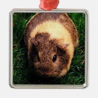 Agouti Guinea Pig in the Grass Silver-Colored Square Decoration