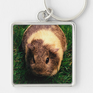 Agouti Guinea Pig in the Grass Silver-Colored Square Key Ring
