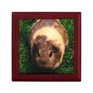 Agouti Guinea Pig in the Grass Small Square Gift Box