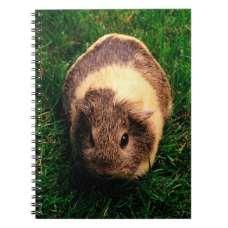 Agouti Guinea Pig in the Grass Spiral Notebook