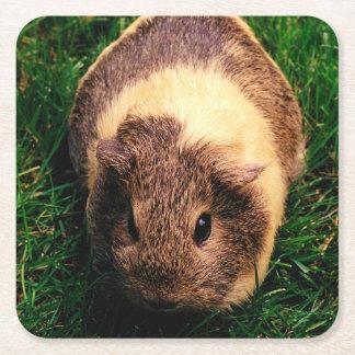 Agouti Guinea Pig in the Grass Square Paper Coaster