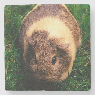 Agouti Guinea Pig in the Grass Stone Coaster