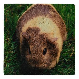 Agouti Guinea Pig in the Grass Trivet