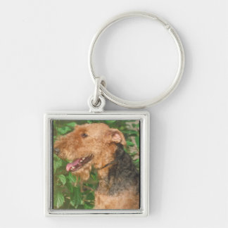 Airedale Terrier Silver-Colored Square Key Ring