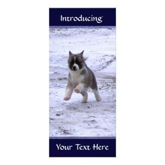 Akita Pup Rack Cards