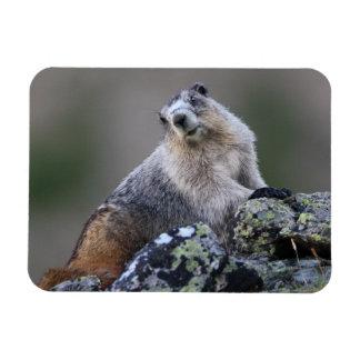 alaska marmot magnet