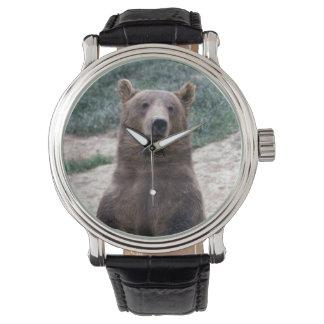 Alaska, southeast region Brown bear Ursus Watch