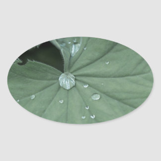 alchemilla oval sticker