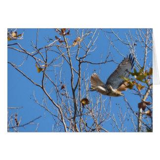 All occasion notecard of Hawk in flight