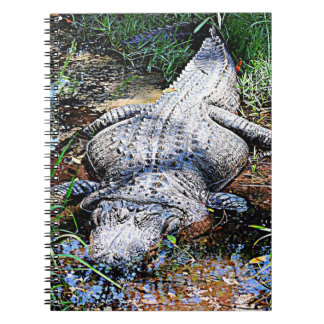 Alligator (Florida, Louisiana and Mississippi) Notebooks
