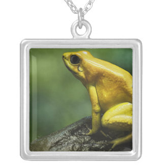 also known as Golden Dart Frog; endemic to the Silver Plated Necklace