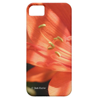 Amaryllis 01 iPhone 5 Case For The iPhone 5