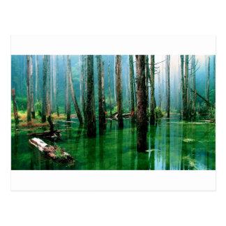 Amazon Marsh Postcard