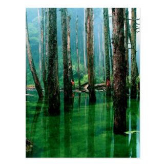 Amazon Marsh Postcard