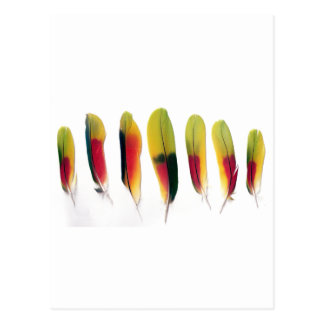 Amazon Parrot Feathers Postcard