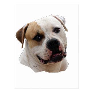 Amercian bulldog postcard