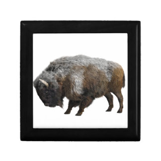 American Bison in Winter Gift Box