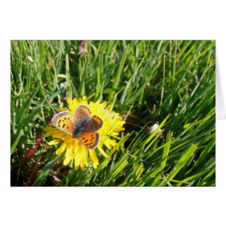 American Copper Butterfly Note Card