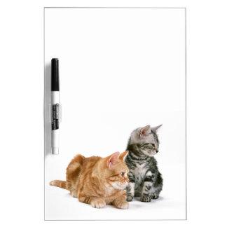 American Shorthair Cat 2 Dry Erase Board