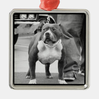 American Staffordshire Terrier Christmas Ornament