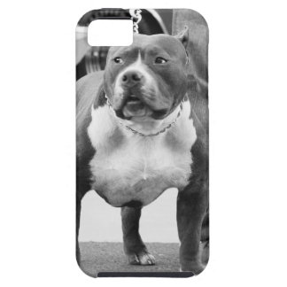 American Staffordshire terrier iPhone 5 Cover