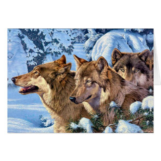 American wolf - brown wolf - wolf animal card