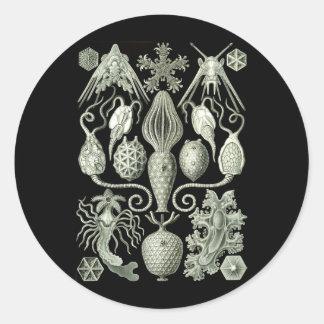 Amphoridea Classic Round Sticker