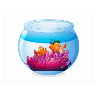 An aquarium with two orange fishes postcard