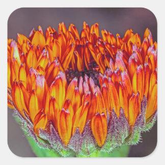 An Unopened Orange Gerbera Daisy Square Sticker