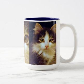 Anakin Two Legged Cat, Cute Kitten Mug, Close Up