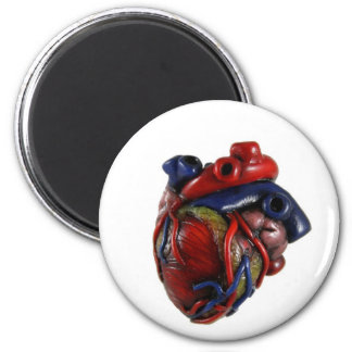 Anatomical Heart Magnets