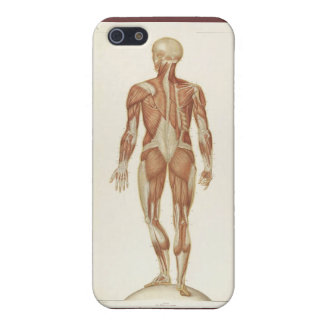 Anatomy Posterior Case For iPhone 5/5S