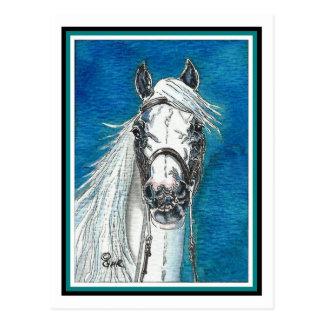 Andalusian Horse Art Postcard