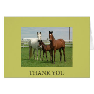 ANDALUSIAN HORSE FAMILY CARD